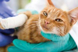 Centres de soins pour animaux