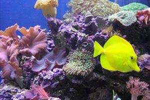Poissons et aquariums